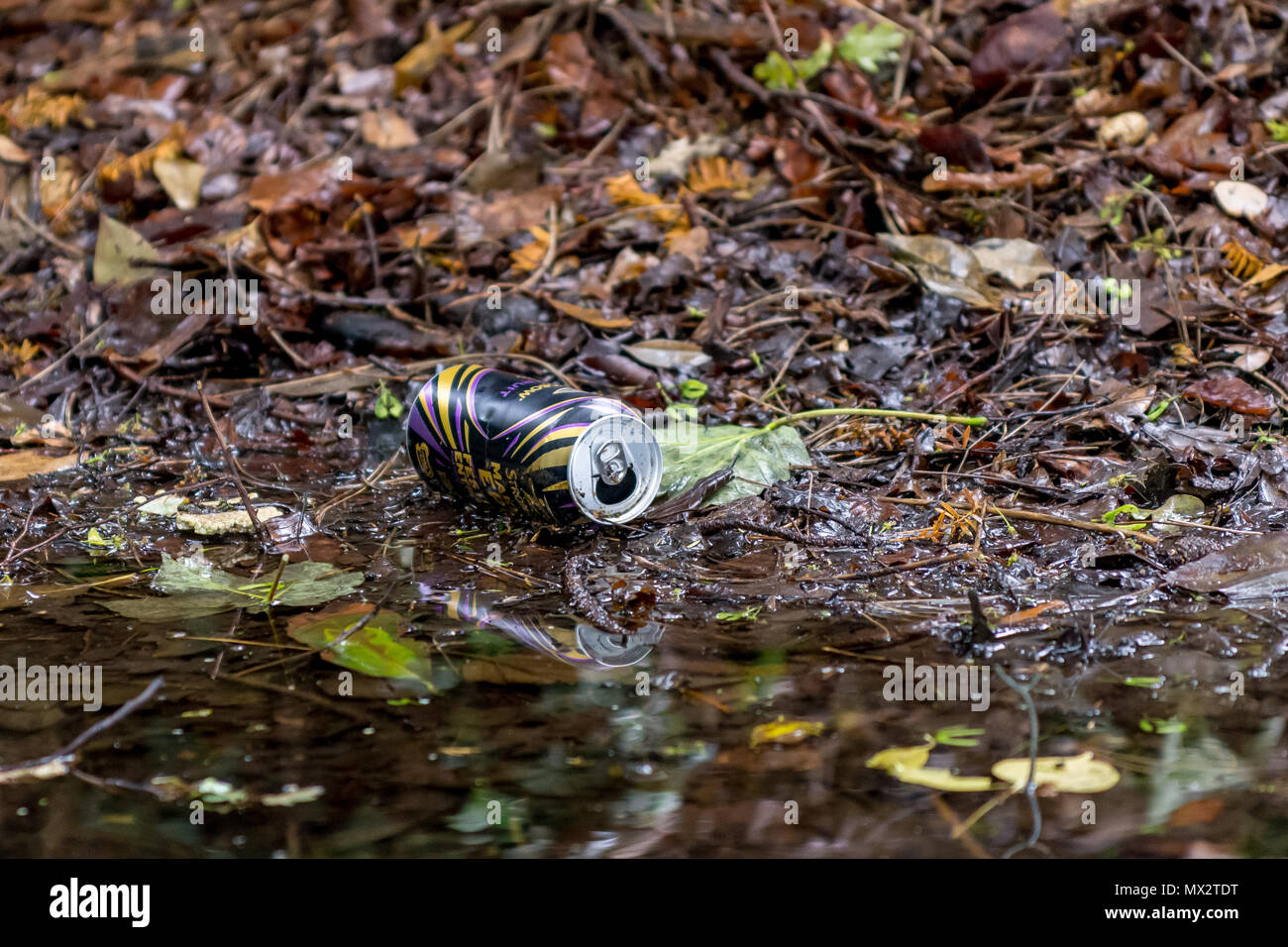 Aluminium drink can discarded as litter, lying on the ground amongst leaves and woody debris, close beside dark water puddle. - Stock Image