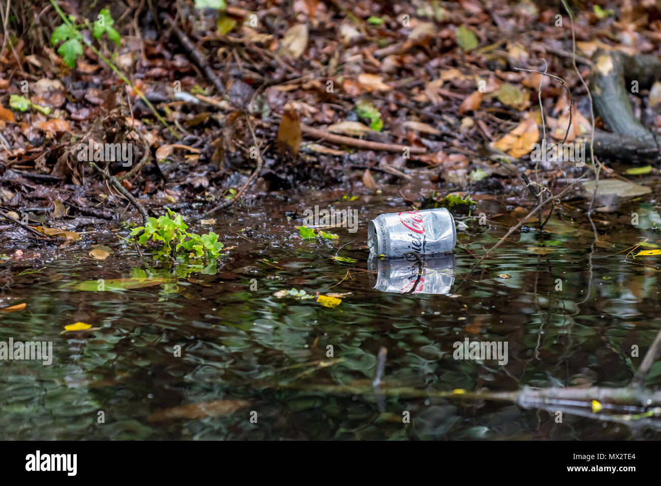 Aluminium drink (diet coca cola) can discarded as litter, floating on surface of dark water in a wooded ditch. The can is reflected in the water. - Stock Image