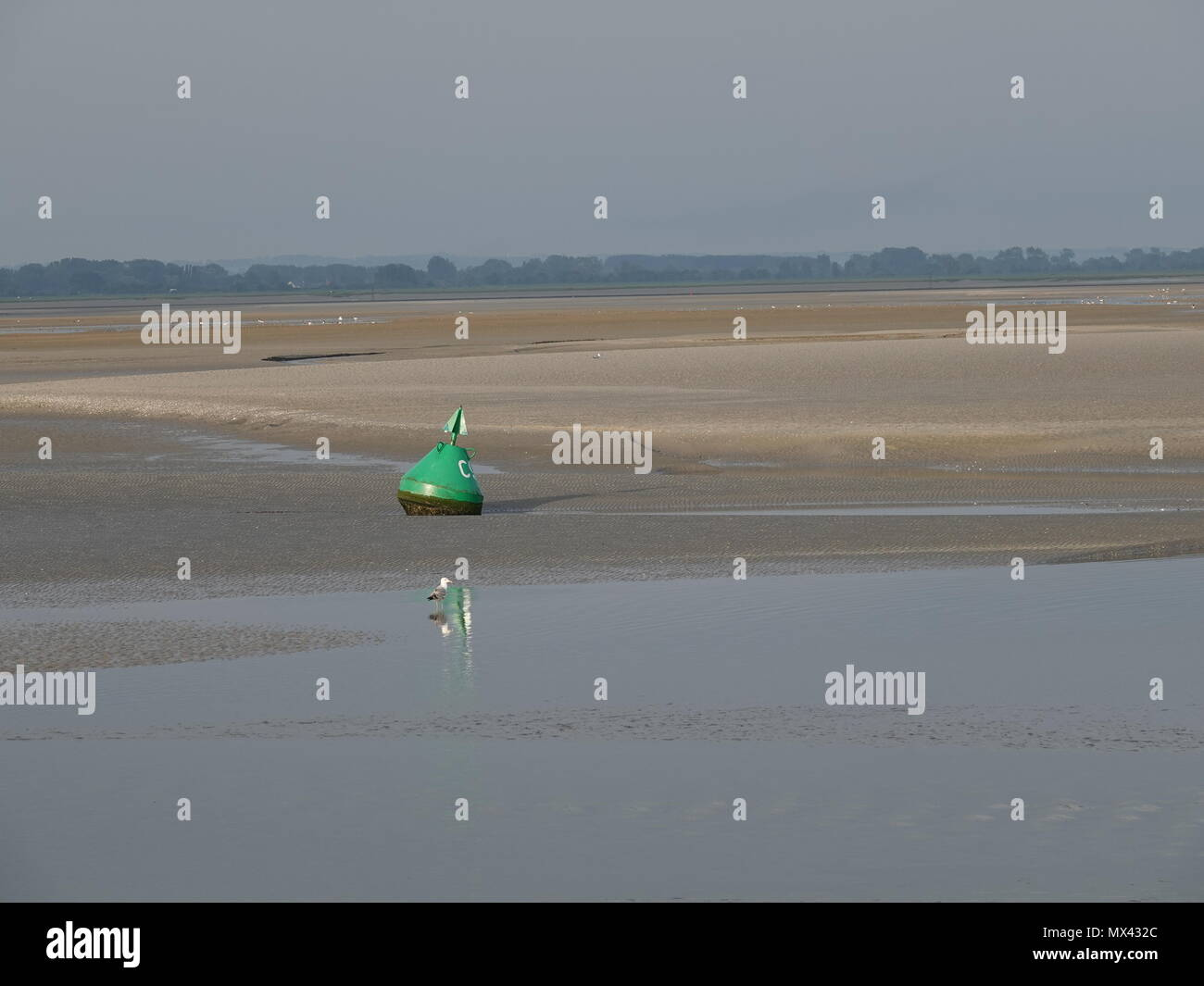 Gull standing at the edge of the water in the reflection of a green channel marker at low tide, Le Crotoy, France - Stock Image