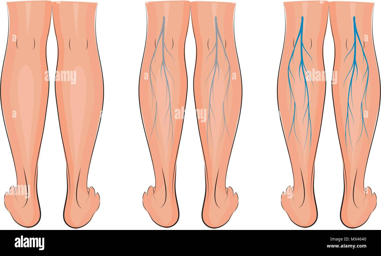 Veins Stock Vector Images - Alamy