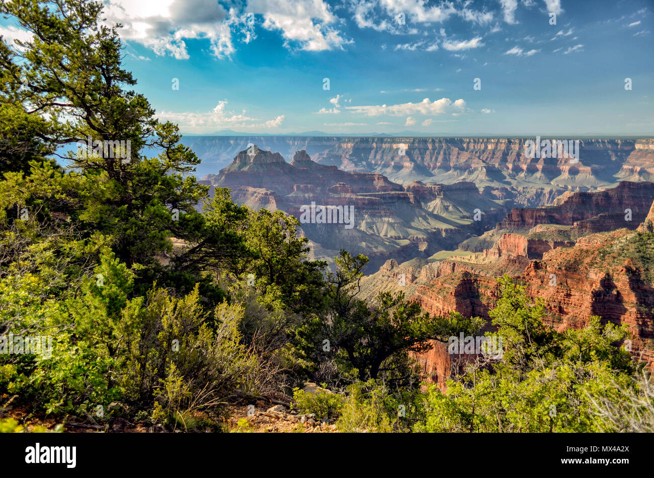 Scenic view of the Grand Canyon with trees and bushes in foreground colorful canyon below under a blue sky with white fluffy clouds. - Stock Image