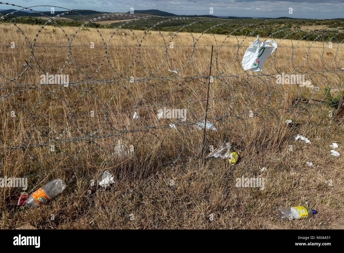 Discarded plastic bags and other plastic along a razor wire fence along the N2 motorway just outside Port Elizabeth, South Africa - Stock Image
