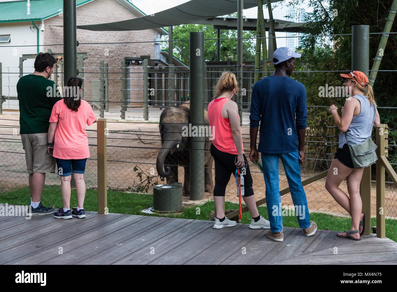 Families and friends enjoy a baby elephants at the Houston Zoo. Houston, Texas, USA. - Stock Image