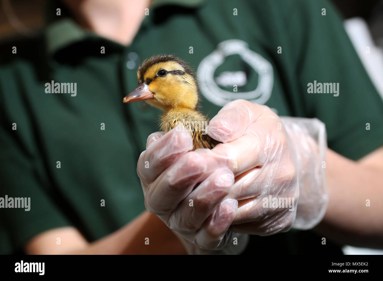 Baby animals pictured at the Brent Lodge Animal Centre near Chichester, West Sussex, UK. - Stock Image