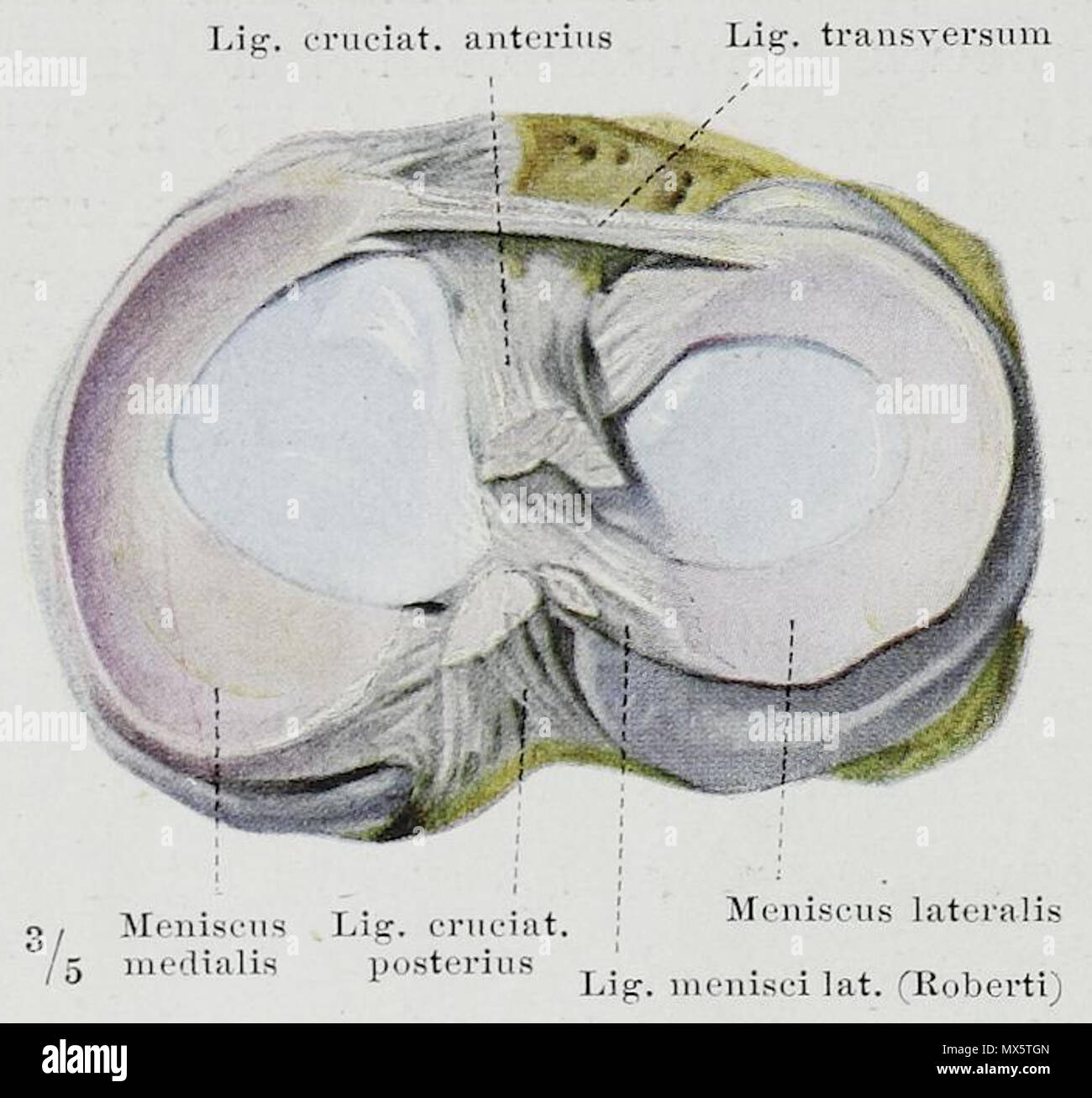 Ausgezeichnet Kanal 131 Grays Anatomie Fotos - Anatomie Von ...