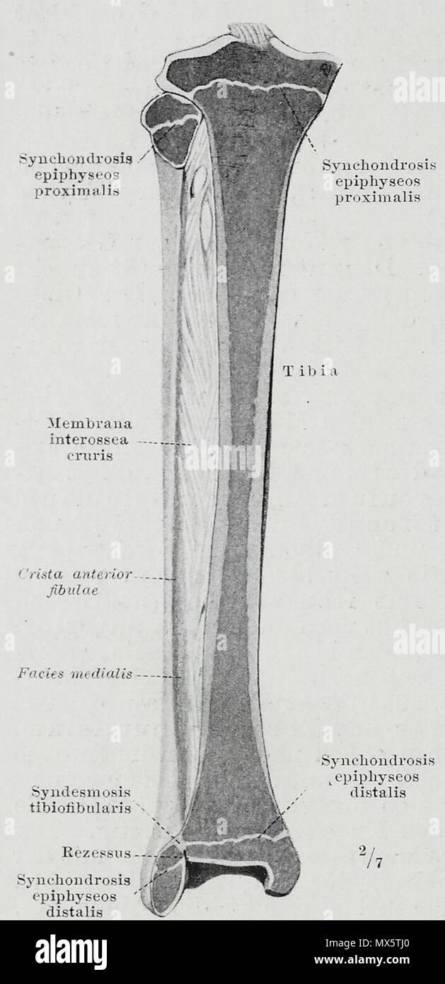 13 November 1921 High Resolution Stock Photography And Images Alamy Synchondrotomie synchondrosis — kremzlinė jungtis statusas t sritis gyvūnų anatomija, gyvūnų morfologija atitikmenys: alamy