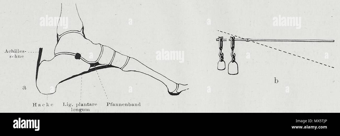 Ausgezeichnet Einfache Menschliche Anatomie Galerie - Anatomie Ideen ...
