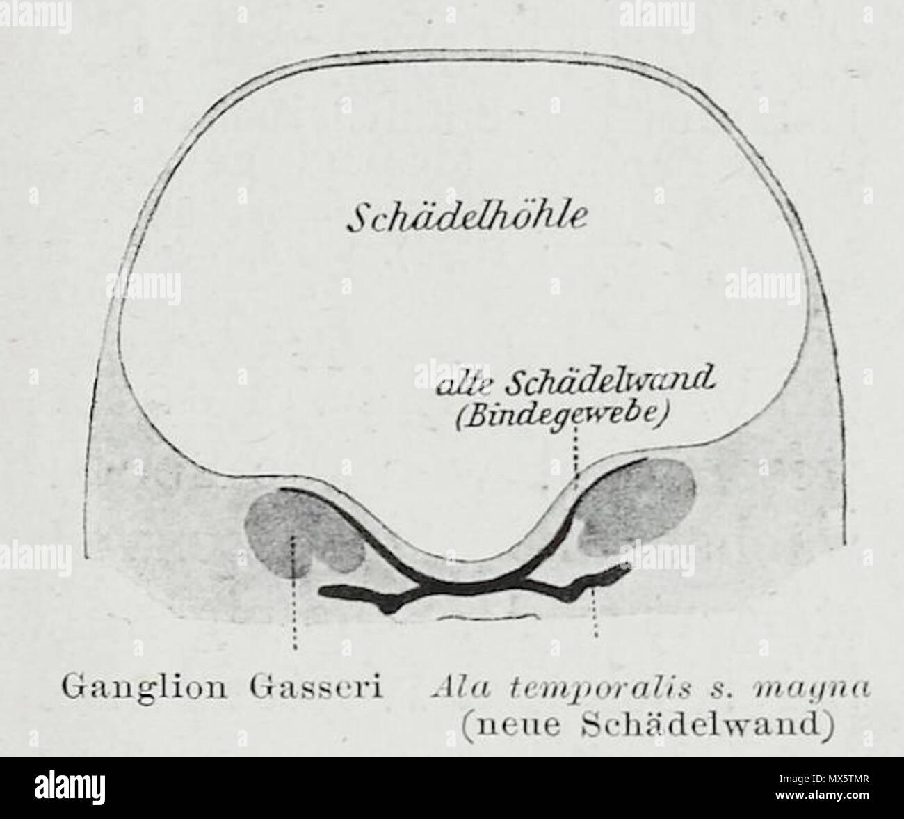Groß Schädelhöhle Anatomie Ideen - Menschliche Anatomie Bilder ...