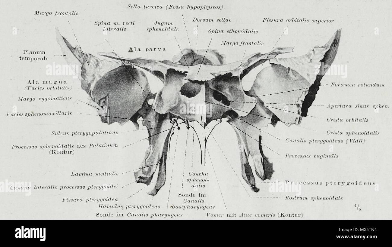 Großartig Rückfläche Anatomie Ideen - Anatomie Von Menschlichen ...
