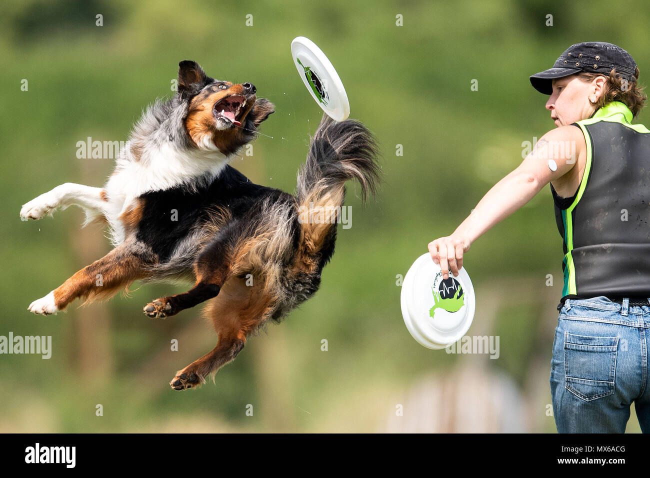 03 May 2018, Germany, Erftstadt: Verena Koening and her dog Sky taking part in the discipline 'freestyle' at the dog frisbee tournament. The participant throws up to seven frisbees that his dog has to catch. The freestyle event is combined to music. Around 60 particpants from 7 countries take part in the event. Photo: Marius Becker/dpa Stock Photo