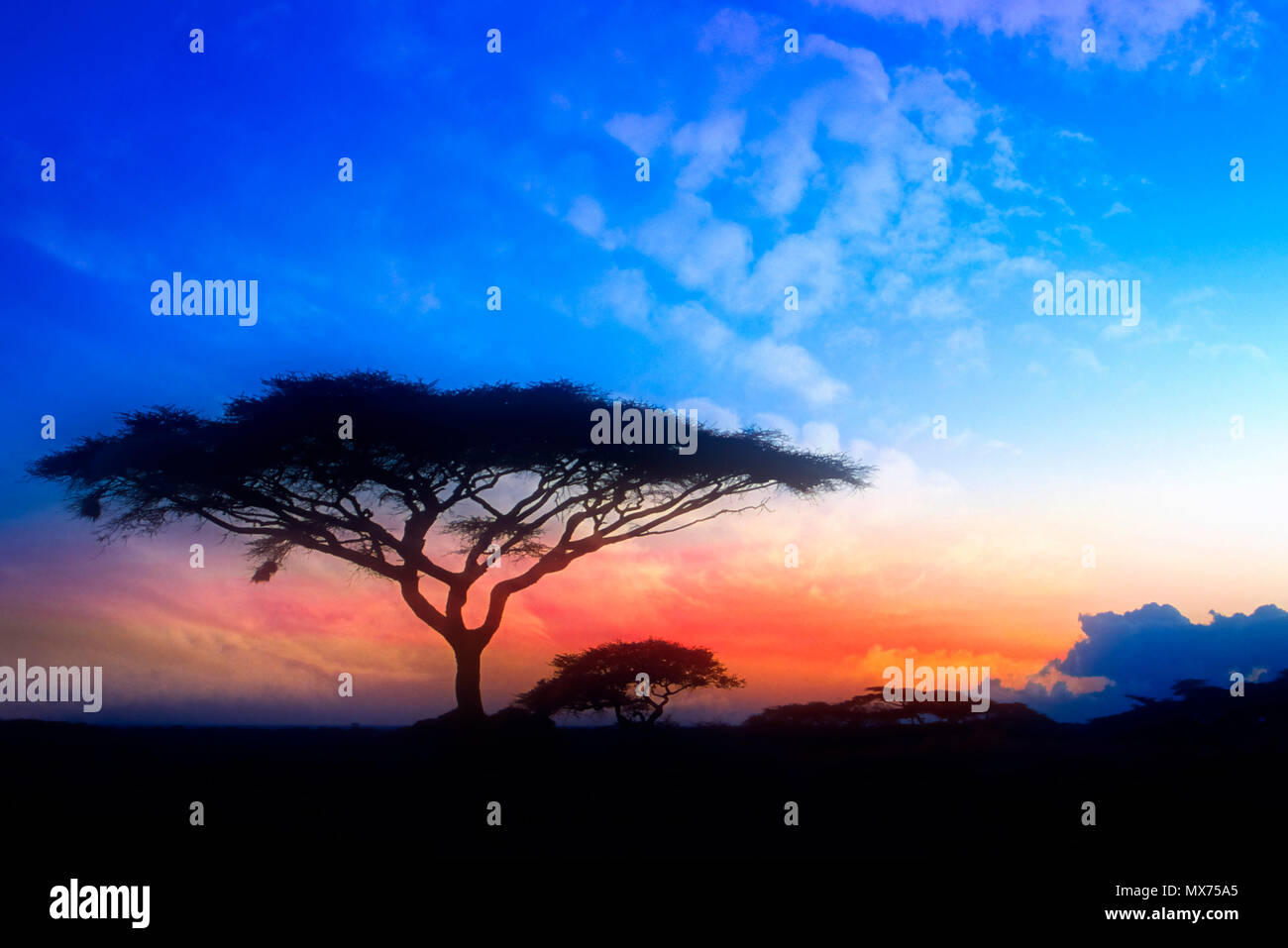 The sun sets on the Serengeti plains in Tanzania, Africa. - Stock Image