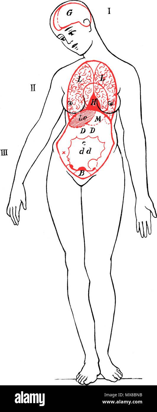 Berühmt Die Inneren Organe Des Körpers Bilder - Anatomie Ideen ...