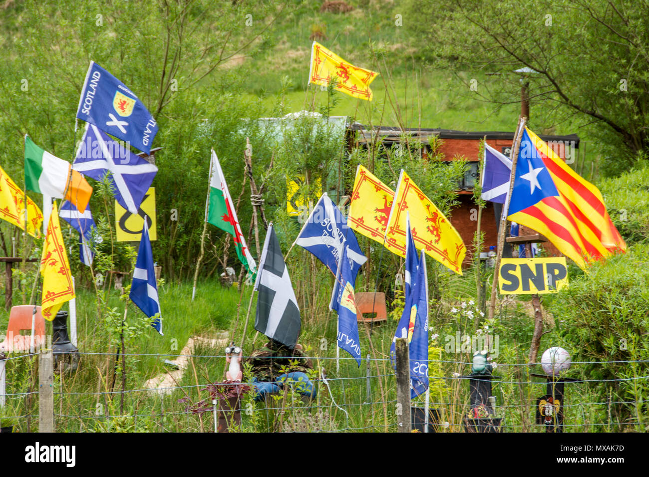 SNP flag in Scotland with national flag in garden. - Stock Image