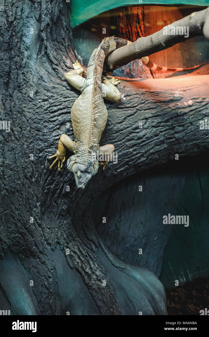 Lizard Cage Stock Photos & Lizard Cage Stock Images - Alamy