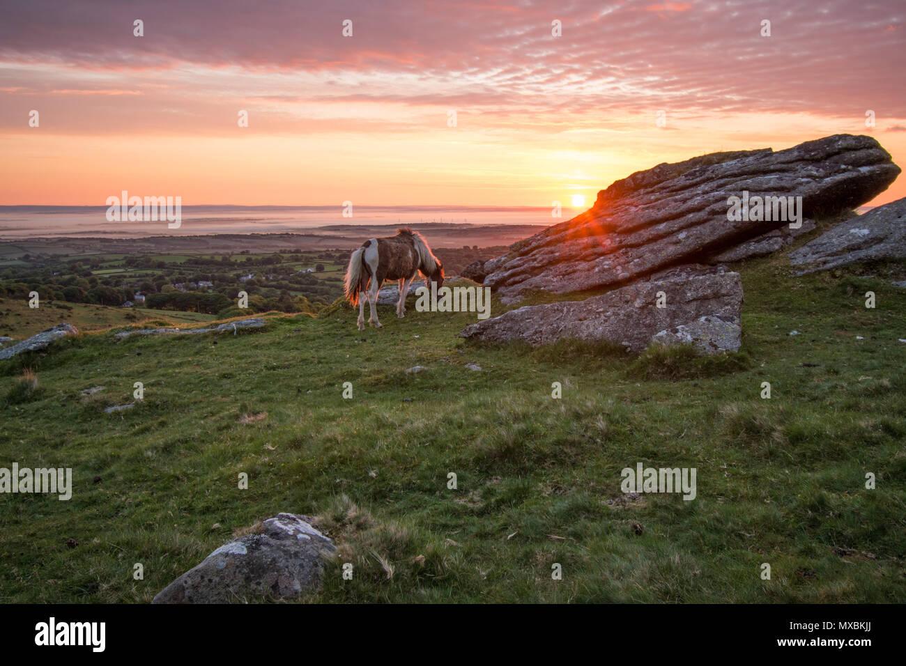 A beautiful Sunday morning June sunrise over the village of Belstone on Dartmoor - Stock Image