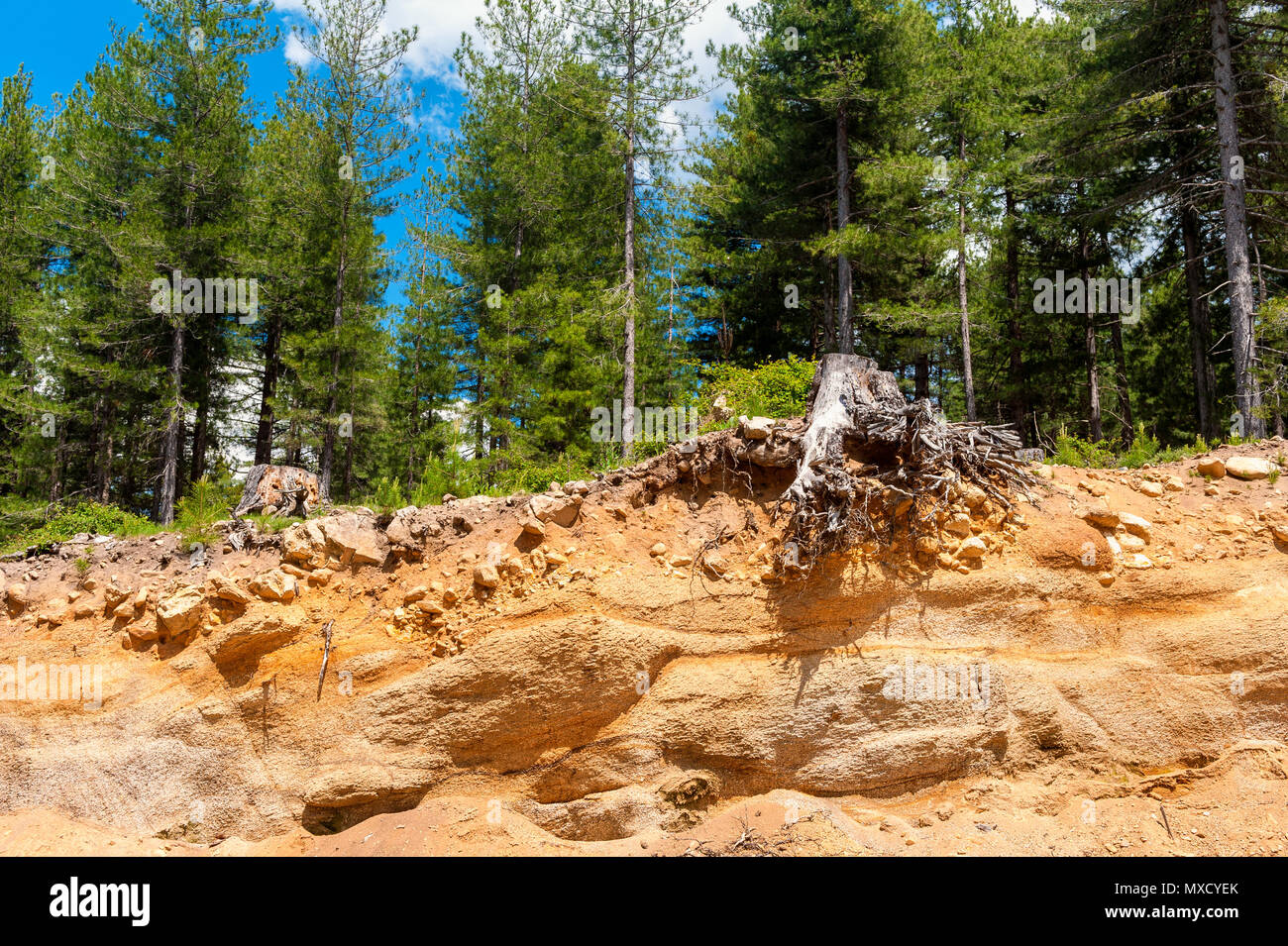 Erosion in Forest in Corsica France - Stock Image