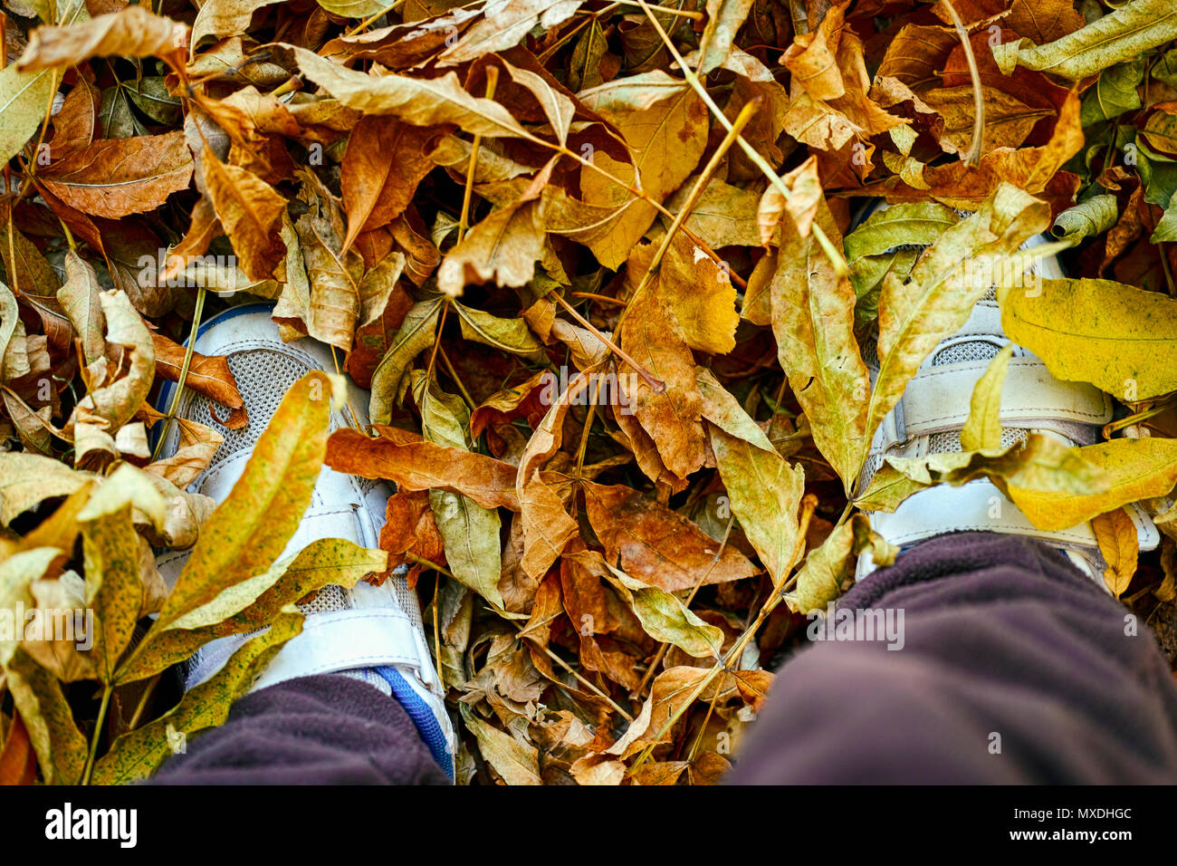 Child feet in snickers standing on yellow autumn leaves. - Stock Image