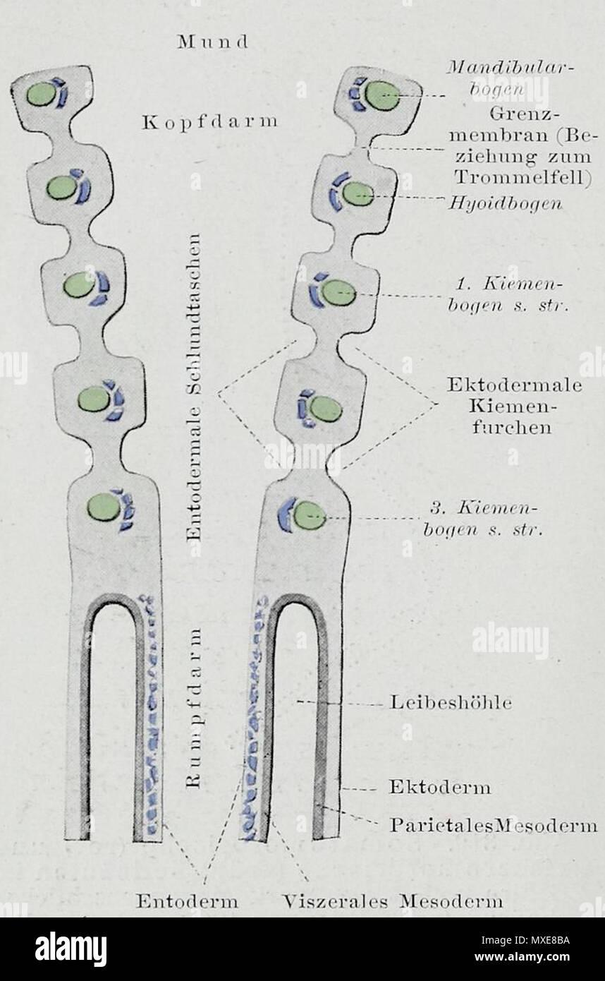 Großartig Hahnblock Anatomie Zeitgenössisch - Menschliche Anatomie ...