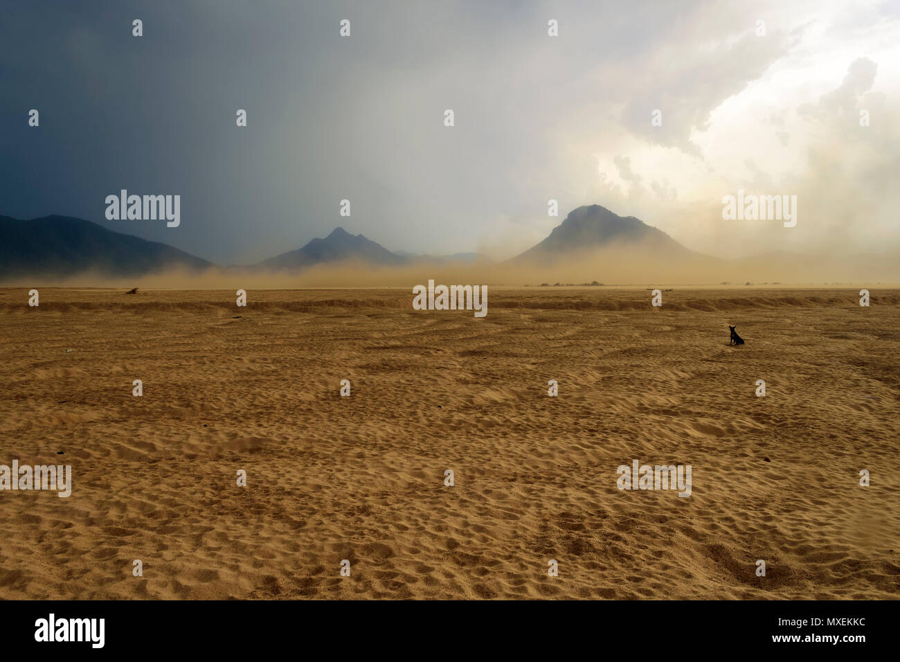 Sandstorm raging over the bank of Mahanadi river during dusk, surrounded by Eastern Ghat mountain range, copy space Stock Photo