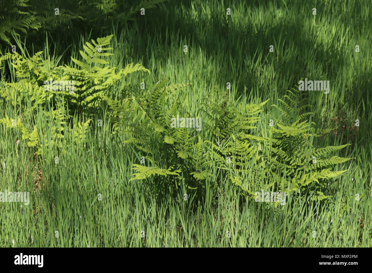 Ferns and grass in undergrowth with tree trunk in background - Stock Image