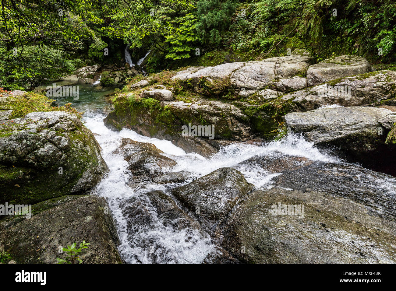 Waterfall at Shiratani Unsuikyo Ravine is a lush nature park containing many of Yakushima island's ancient cedars.  The park offers a network of hikin - Stock Image
