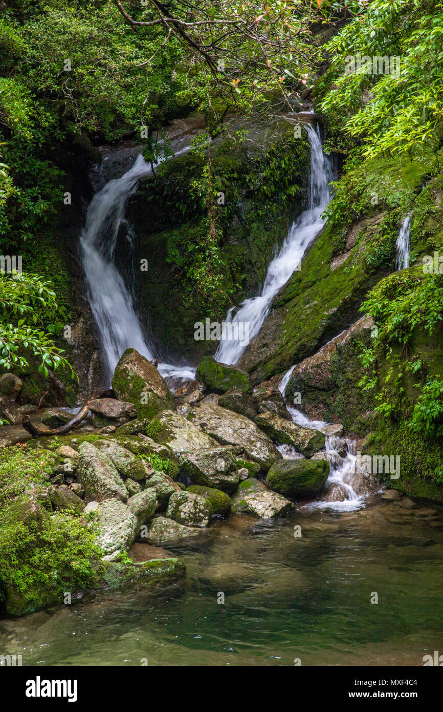 The Shiratani Unsuikyo Ravine is a lush nature park containing many of Yakushima island's ancient cedars.  The park offers a network of hiking trails  - Stock Image