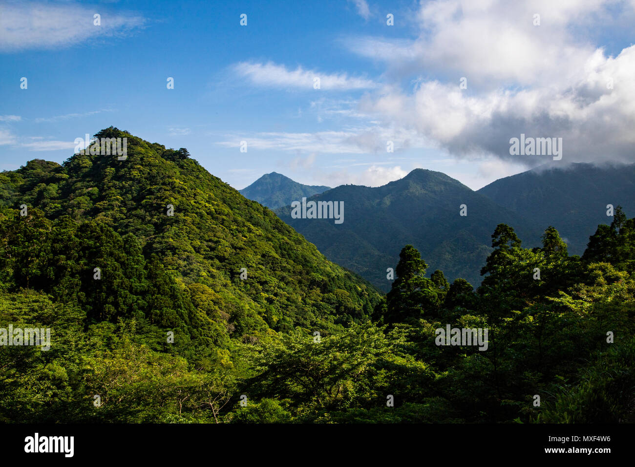 Yakushima is a subtropical island south of Kyushu covered by huge cedar forests that contains some of Japan's oldest living trees some of which are th - Stock Image