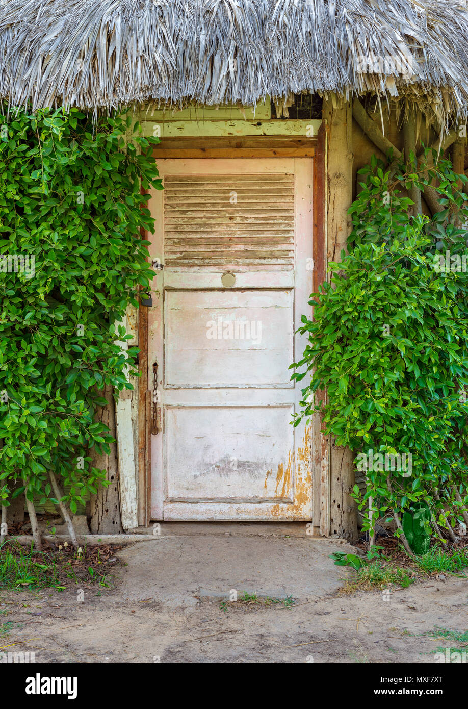 Closed wooden white grunge door surrounded by dense green plants at Montaza public park, Alexandria, Egypt - Stock Image