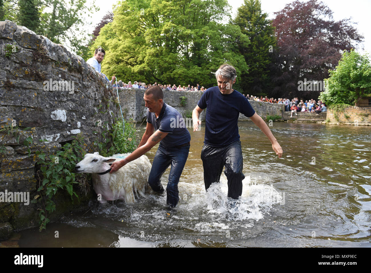 Ashford in the Water, Derbyshire, Uk Farmers dipping their sheep in the River Wye at Sheep Wash Bridge in Ashford-in-the-Water during the villages 'We - Stock Image