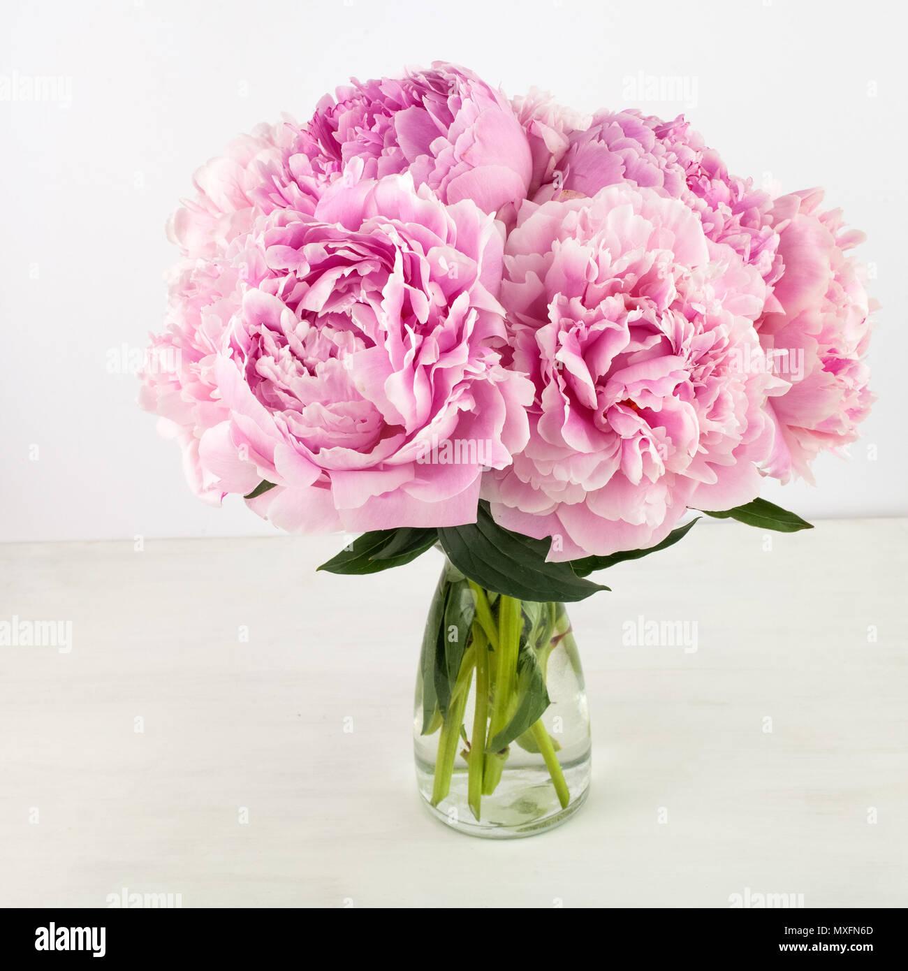 Beautiful pink Peonie flower on light background Stock Photo