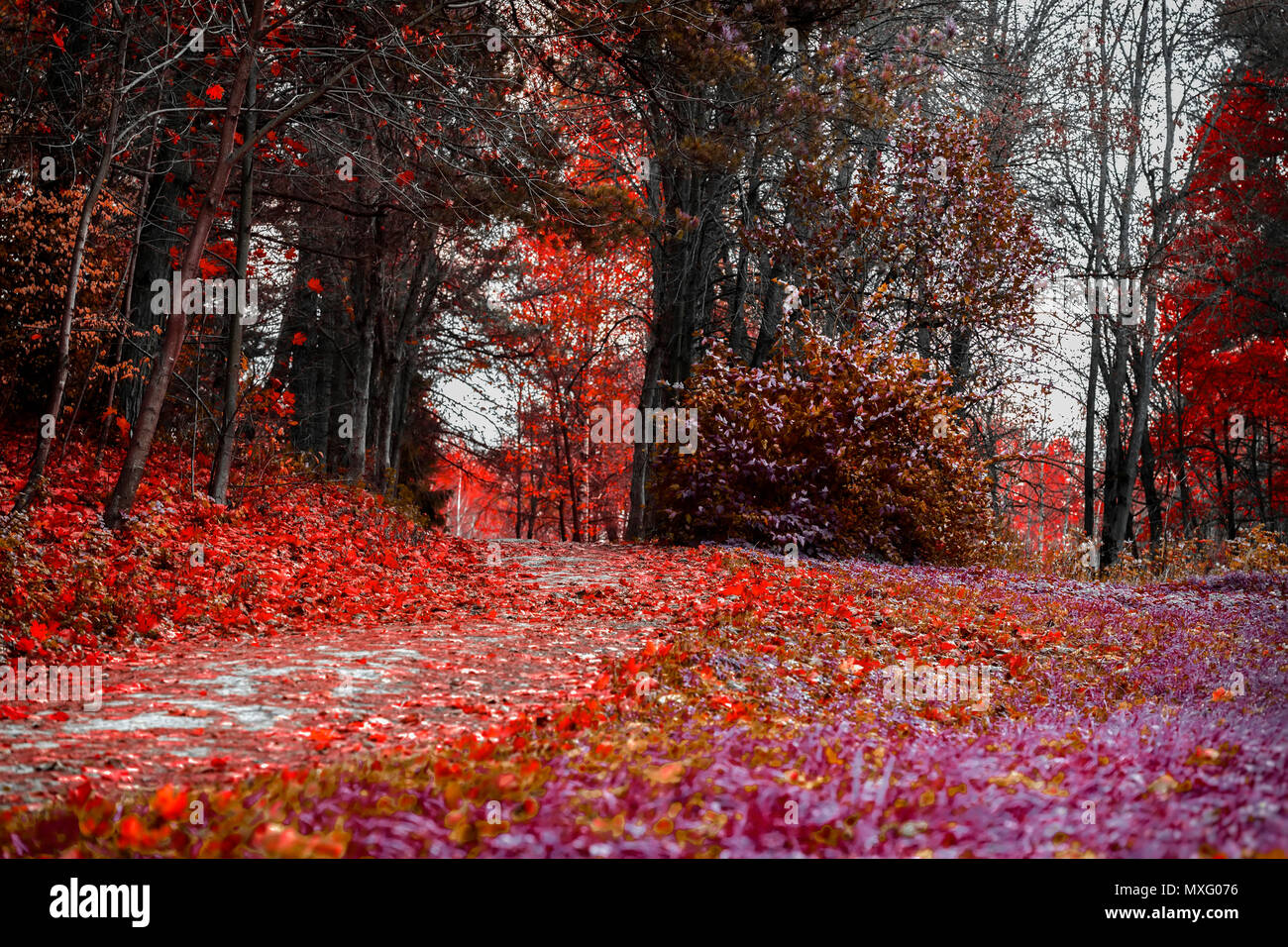 Bright colors of fall. Forest path with many fallen leaves, scarlet autumn landscape in the old park. Walking, mood, nostalgia concept - Stock Image