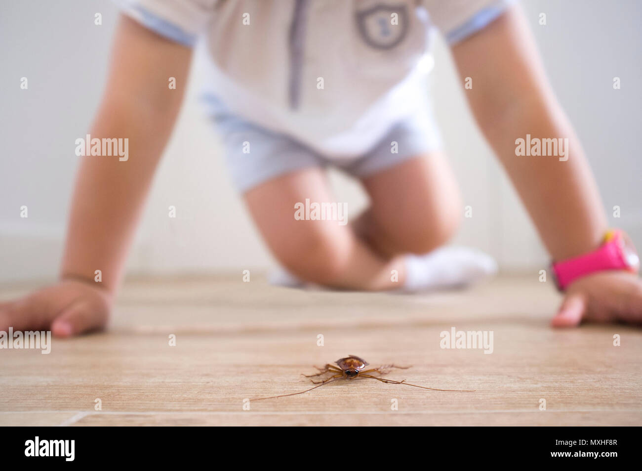 Little boy close to cockroach on the house floor. Pest at home with children concept - Stock Image