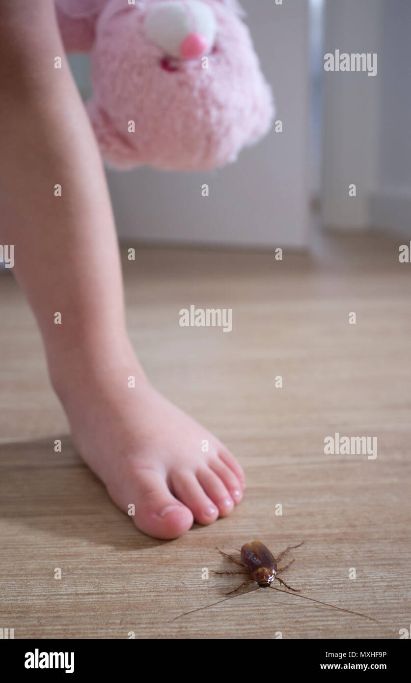 Barafooted little baby close to cockroach over house floor. Pest at home with children concept - Stock Image