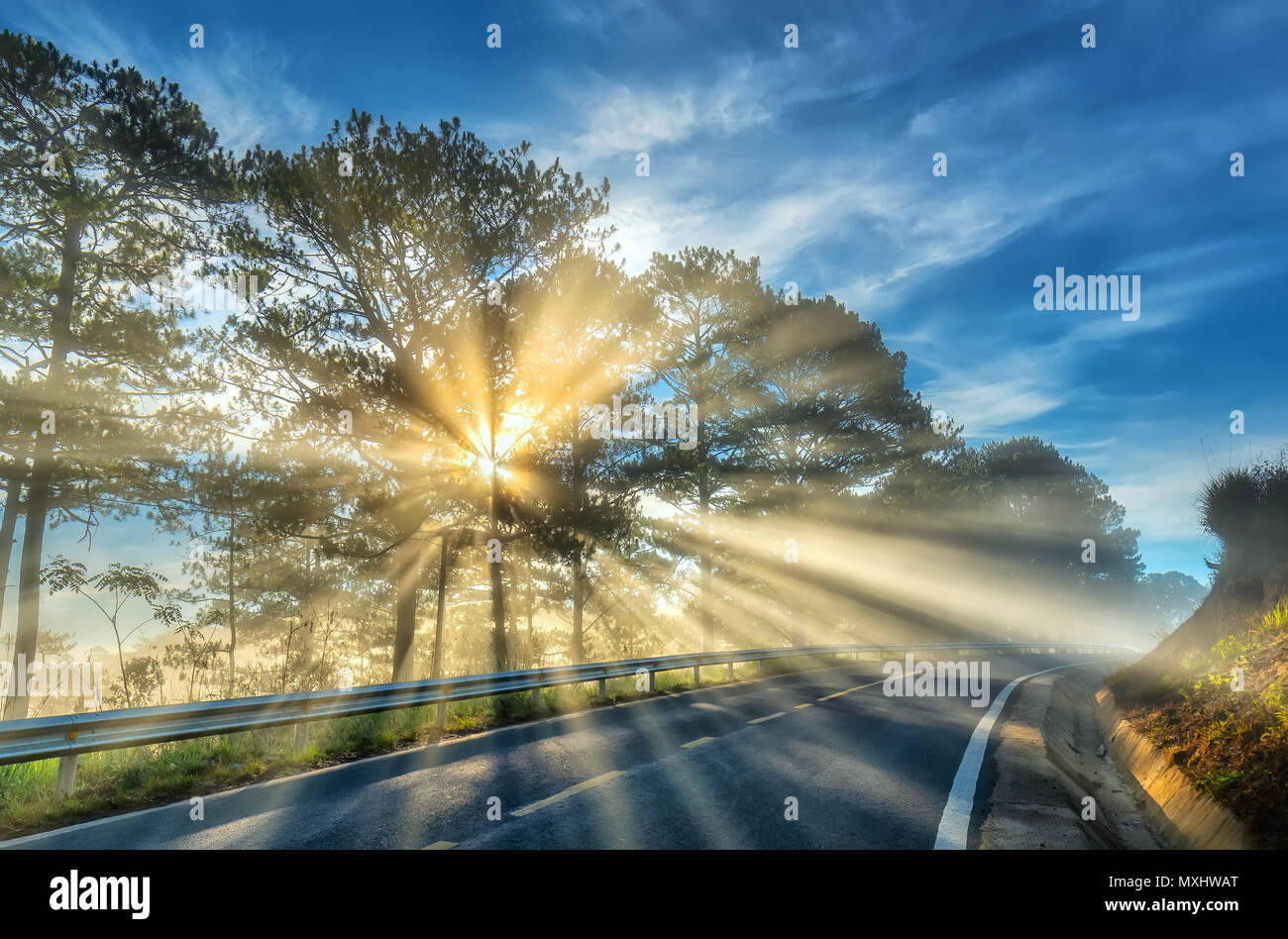 Sun rays shining down through the pine forest road foggy morning sun rays shining down through the pine forest road foggy morning shimmering ray beam shines beneath fanciful to greet the new day in the suburbs m4hsunfo