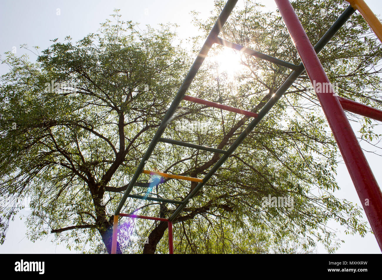 Colorful horizontal laddder or monkey bars below the sunlight in a park, next to a big tree. - Stock Image