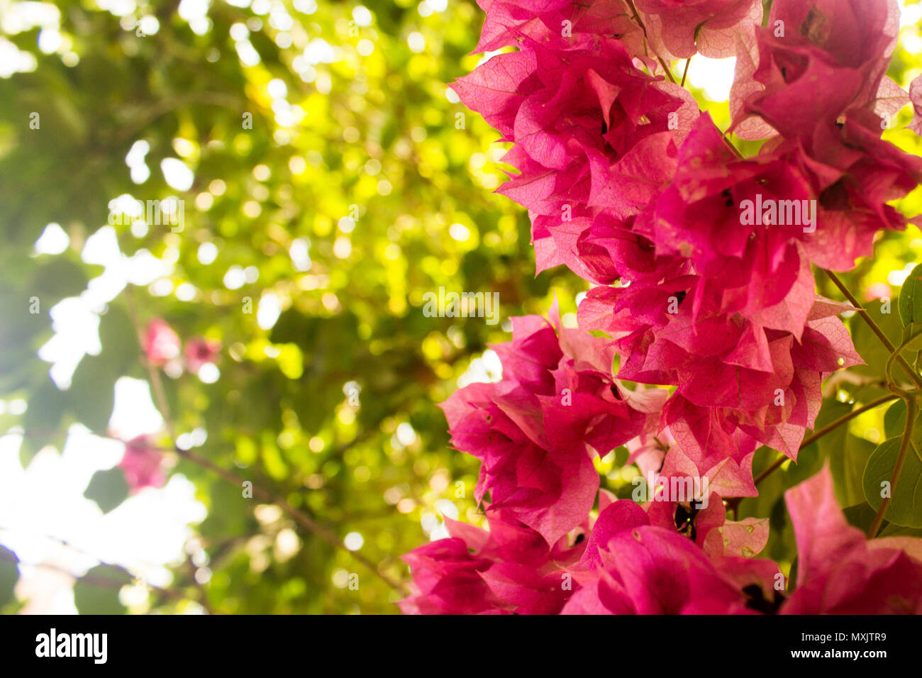 Close-up of a group of violet flowers with foliage as background. - Stock Image