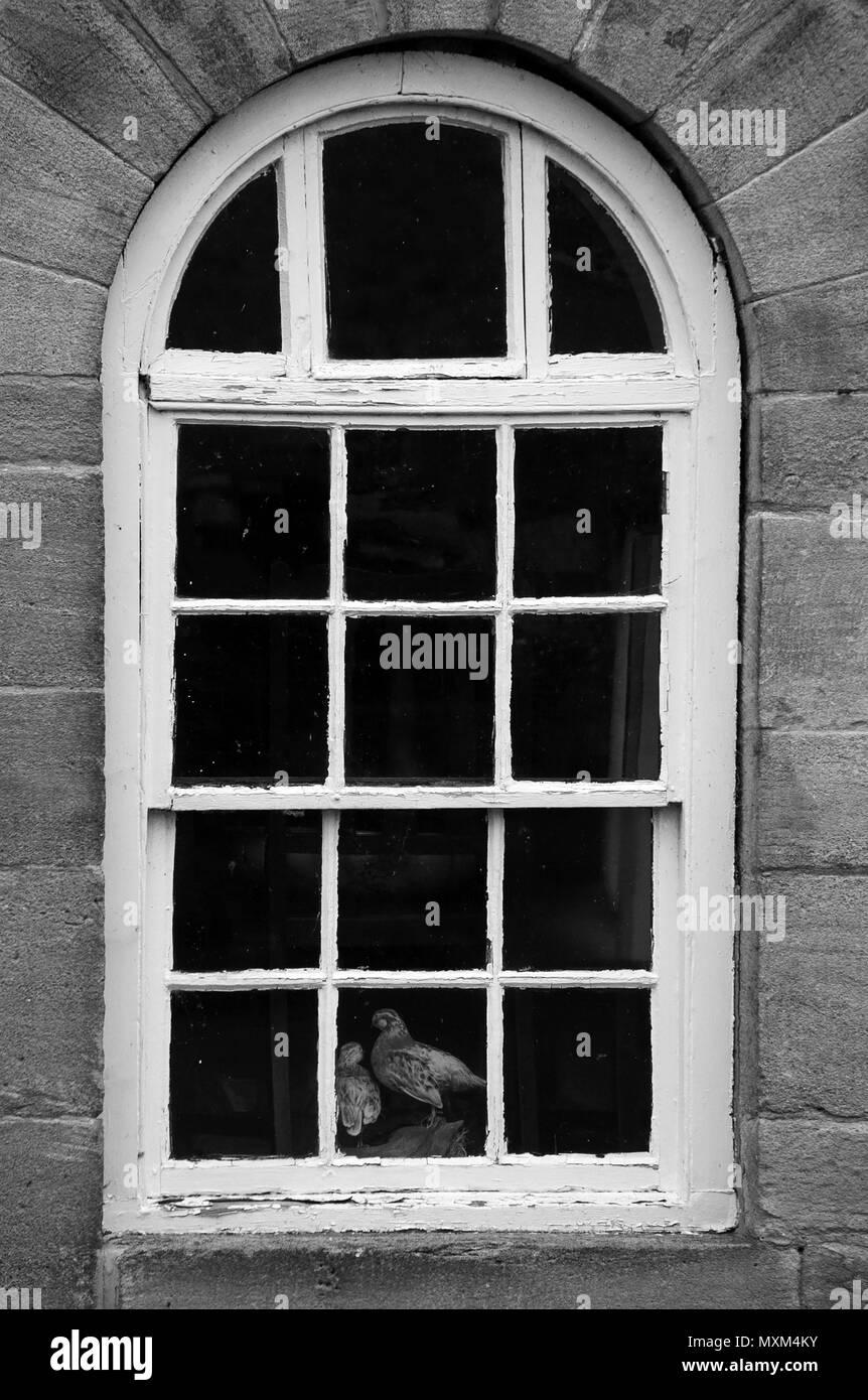 Brace of stuffed partridges in window - Stock Image