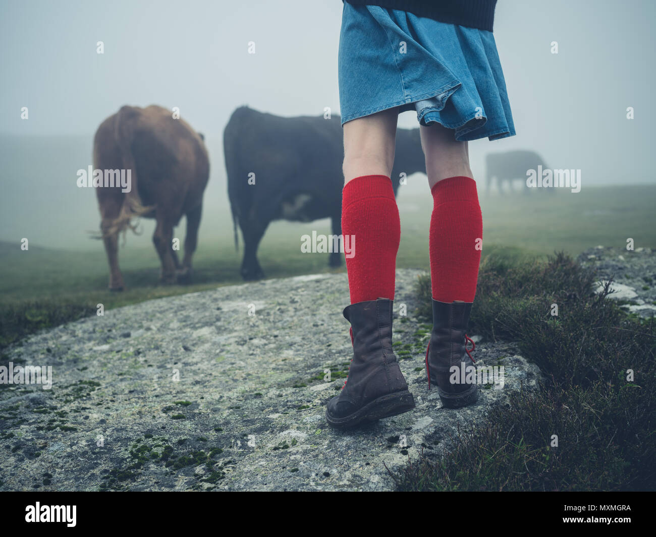 A young woman wearing red socks and hiking boots is walking on the moor in the mist near some cows - Stock Image