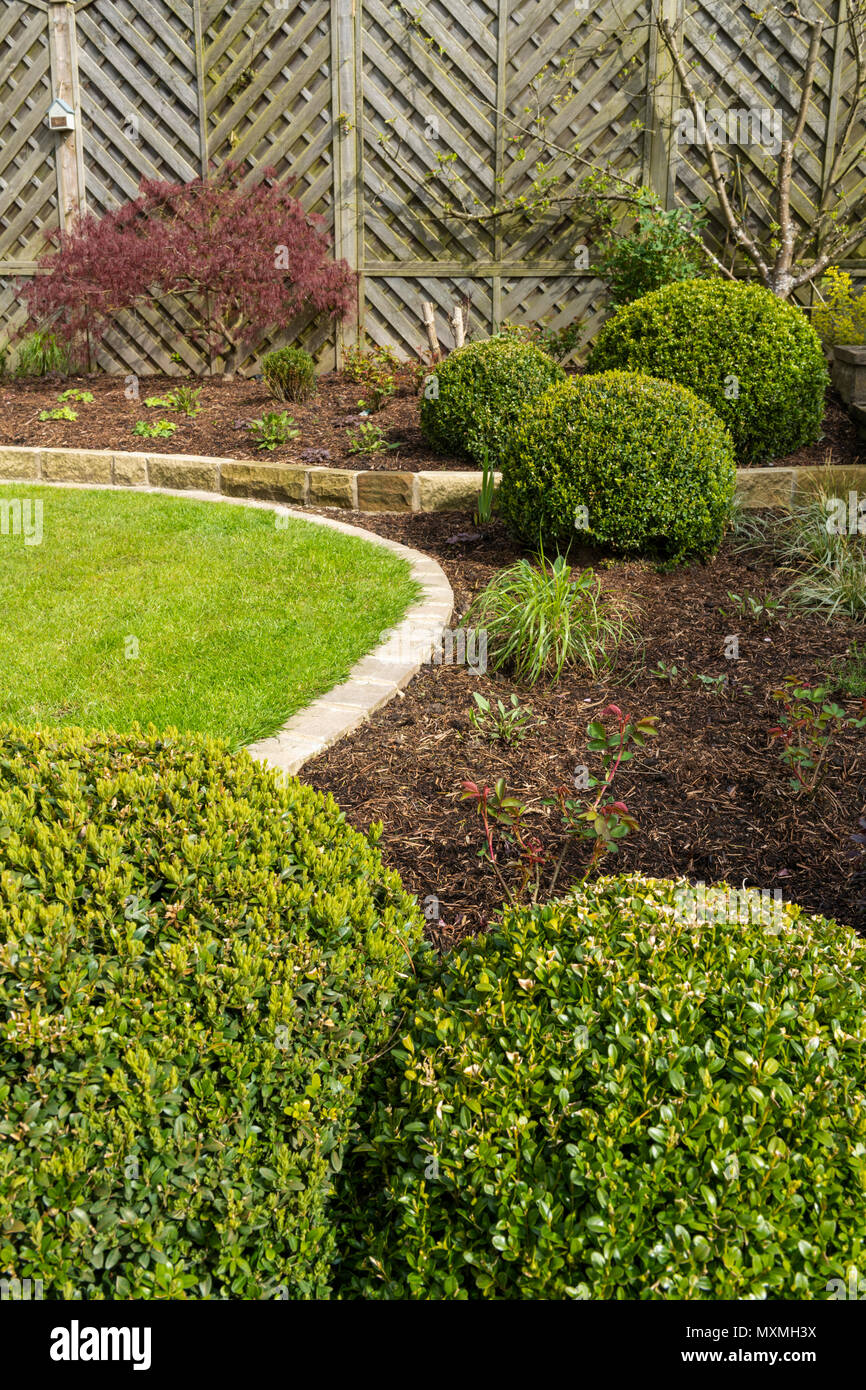 Corner of beautiful, landscaped, private garden with contemporary design, border plants, shrubs, box balls, acer & neat lawn - Yorkshire, England, UK. - Stock Image