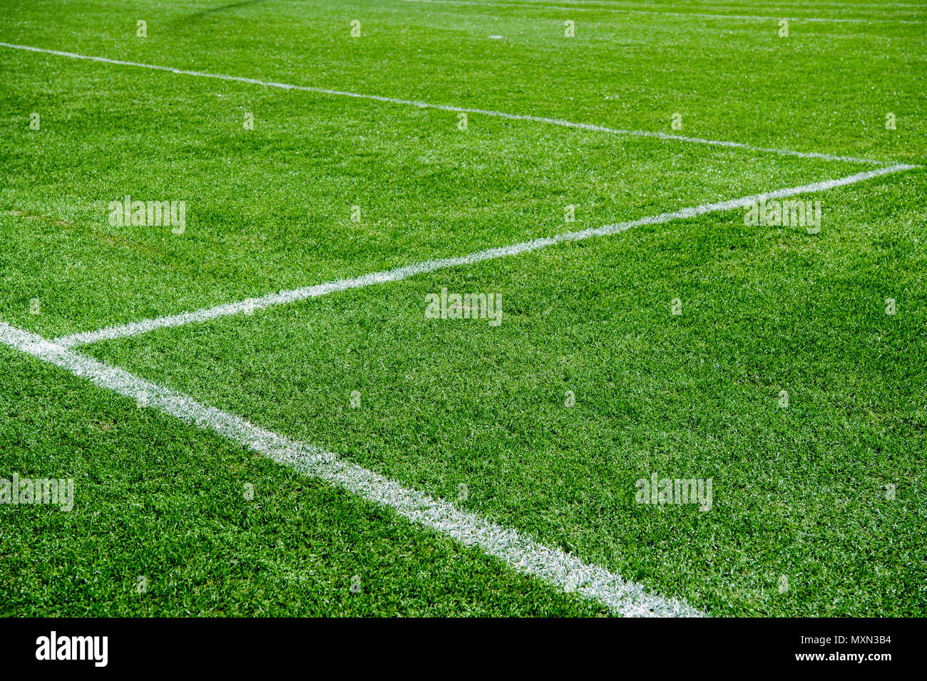 White lines on green grass of a soccer field. Selective focus - Stock Image