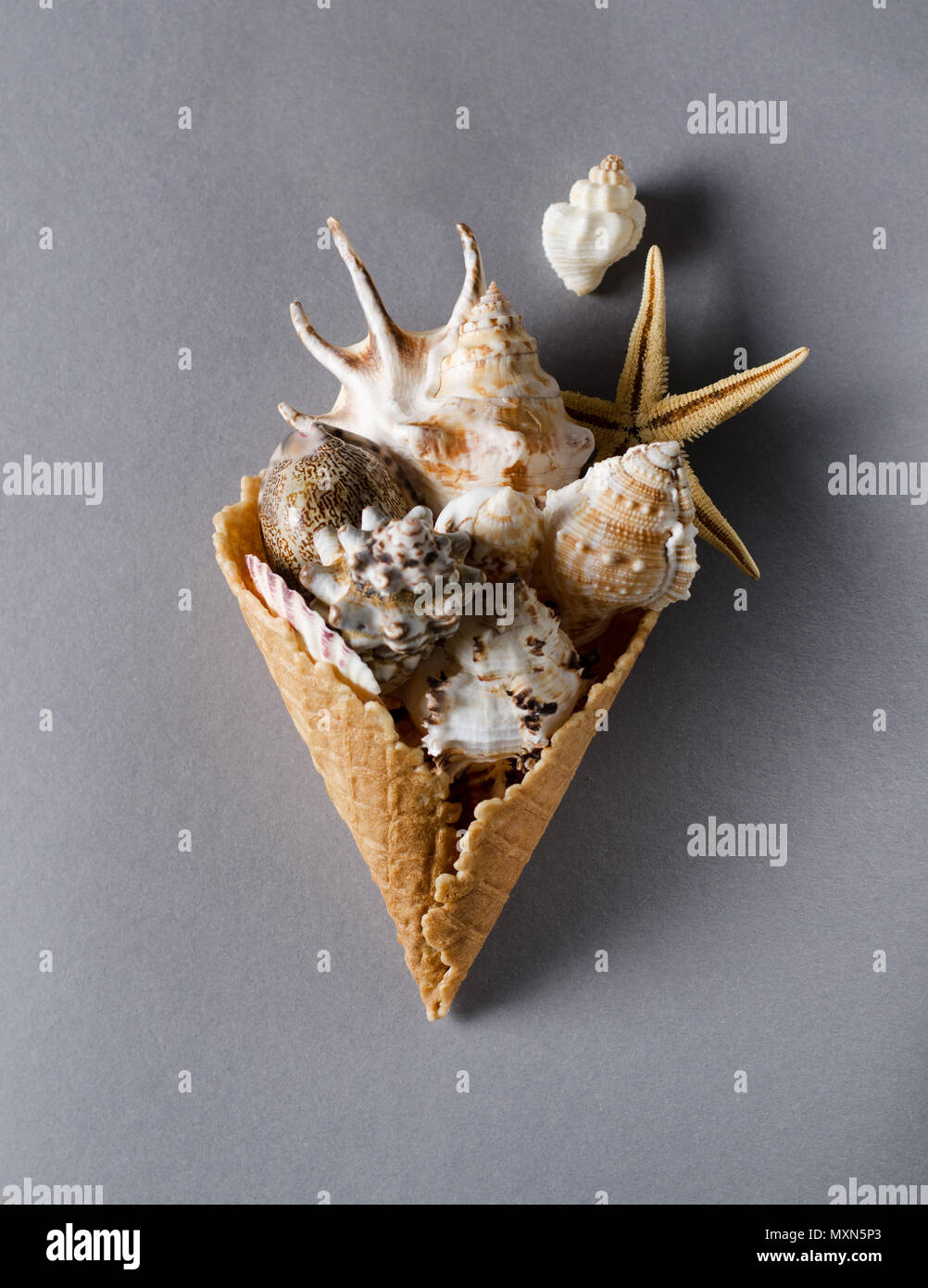 Collection of seashells in a waffle horn on a grey backdrop. Vacation summer flat lay background. - Stock Image