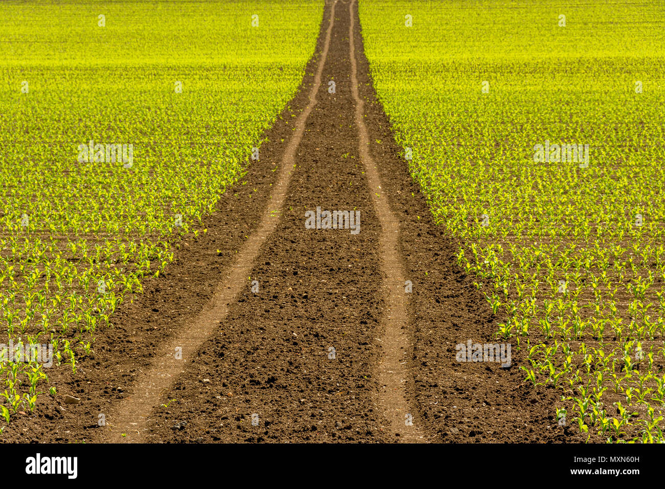 Tire tracks in a agricultural landscape, Puy de Dome , Auvergne Rhône Alpes, France - Stock Image