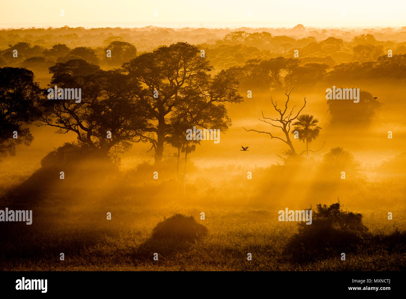 The Pantanal of Brazil at early morning - Stock Image