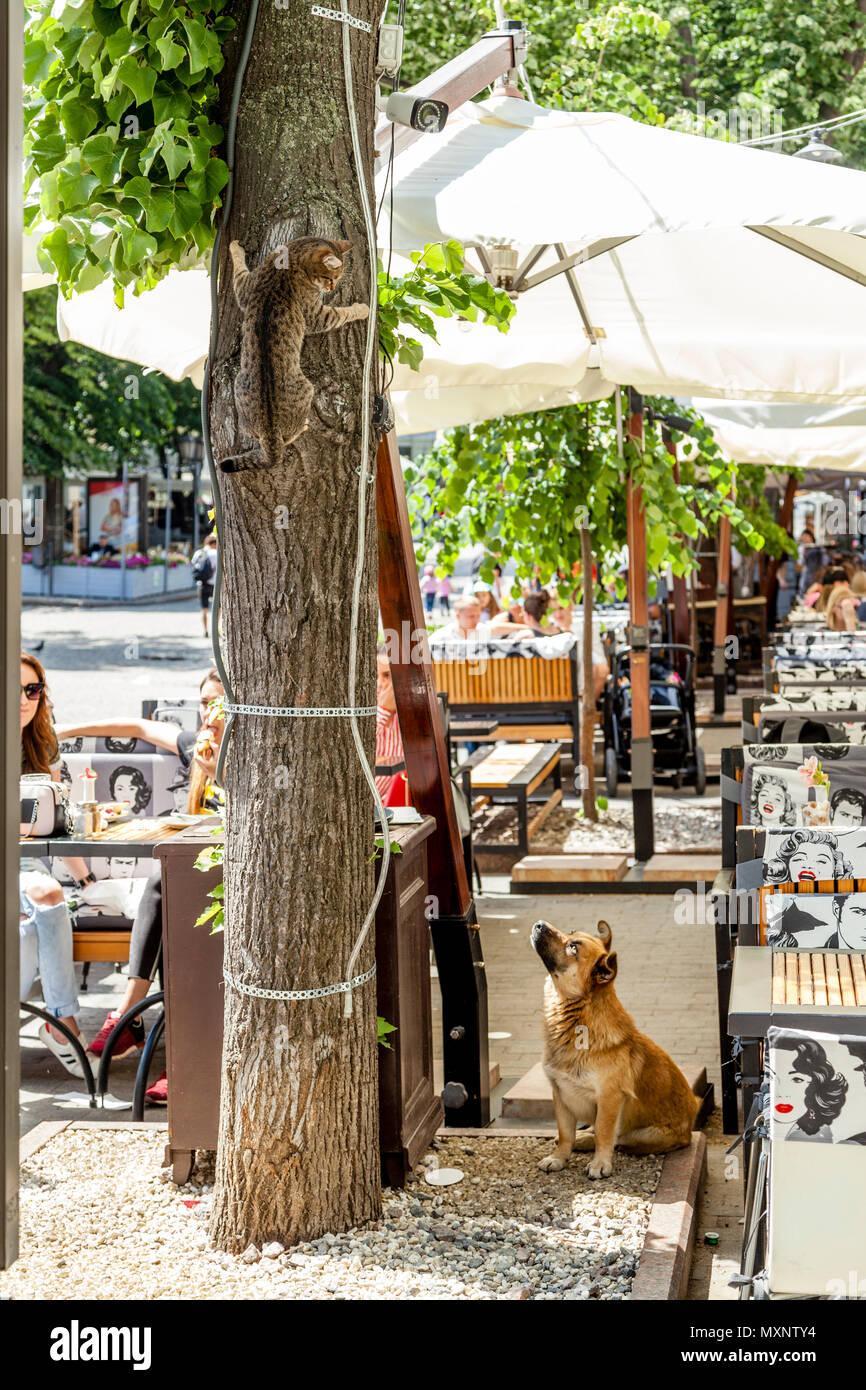 A Frightened Cat Climbs A Tree To Escape A Dog Waiting Below, Deribasovskaya Street, Odessa, Ukraine - Stock Image