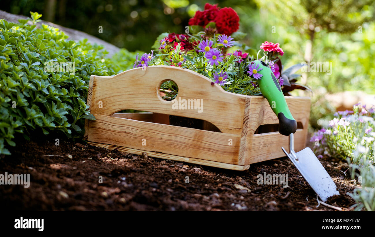 Gardening. Garden Tools and Crate Full of Gorgeous Plants Ready for ...