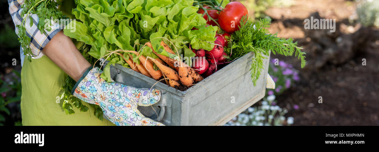 Unrecognizable female farmer holding crate full of freshly harvested vegetables in her garden. Homegrown bio produce concept. Sustainable living. Stock Photo