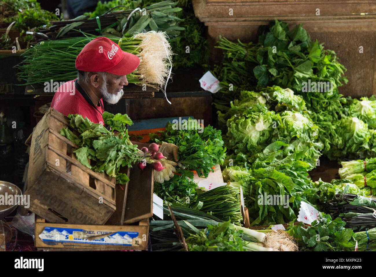 A stall holder wearing gloves laying out produce in the fruit and vegetable market, Port Louis, Mauritius - Stock Image
