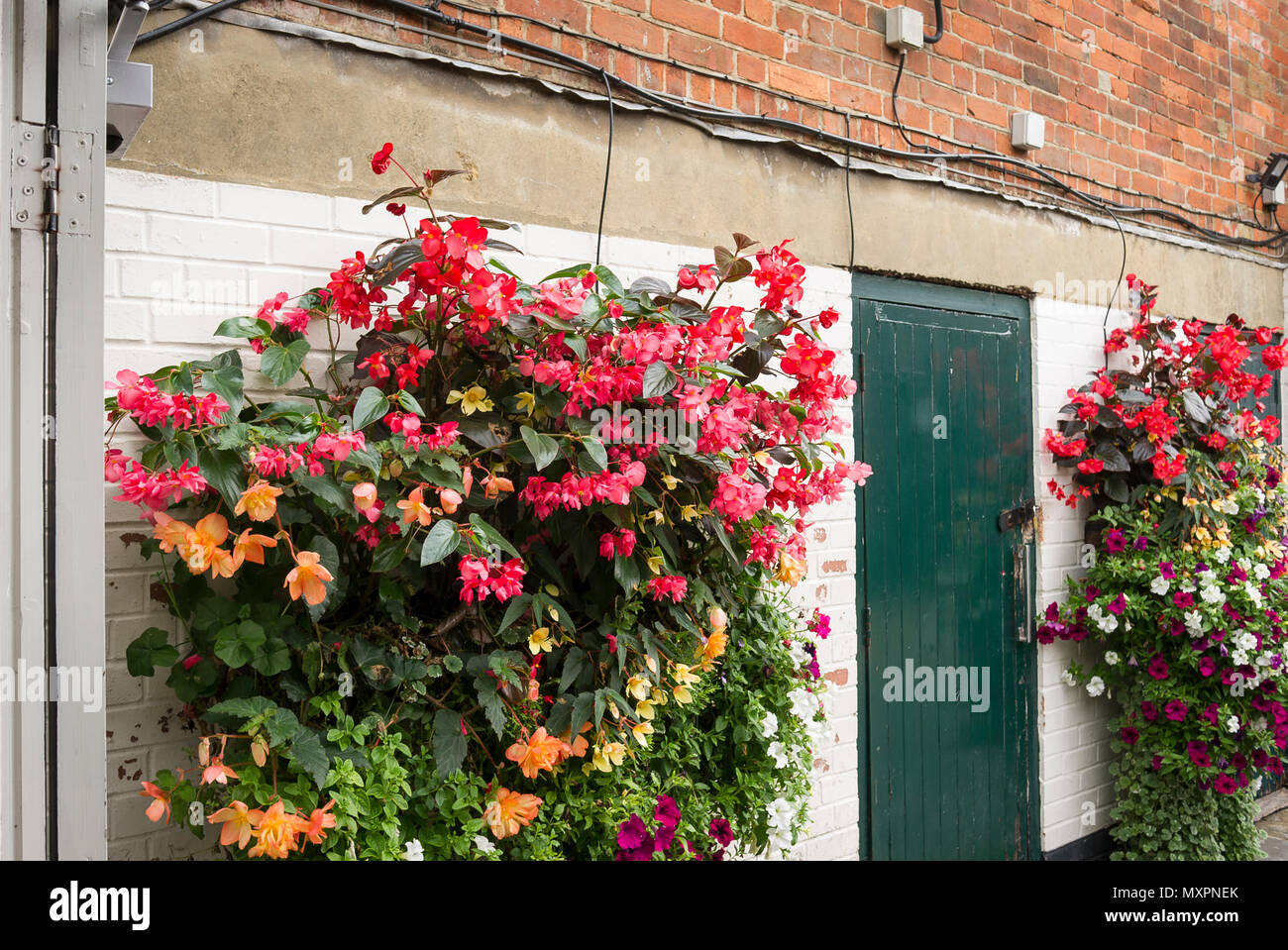 A fairly mundane area in rear of a commercial property enlivened by hanging floral containers on flanking walls - Stock Image