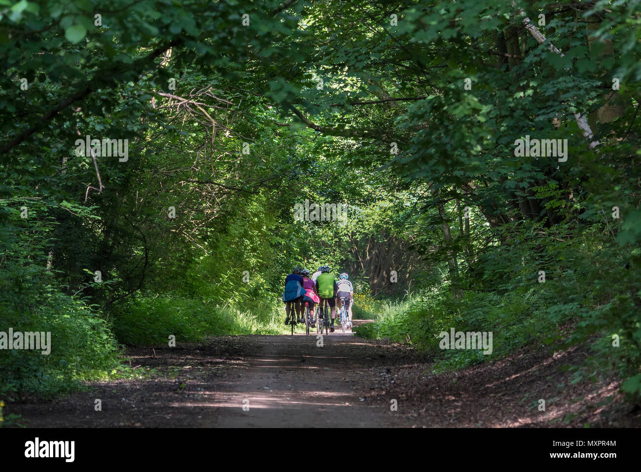 Former railway line now a cycle and walking route with shady trees. - Stock Image