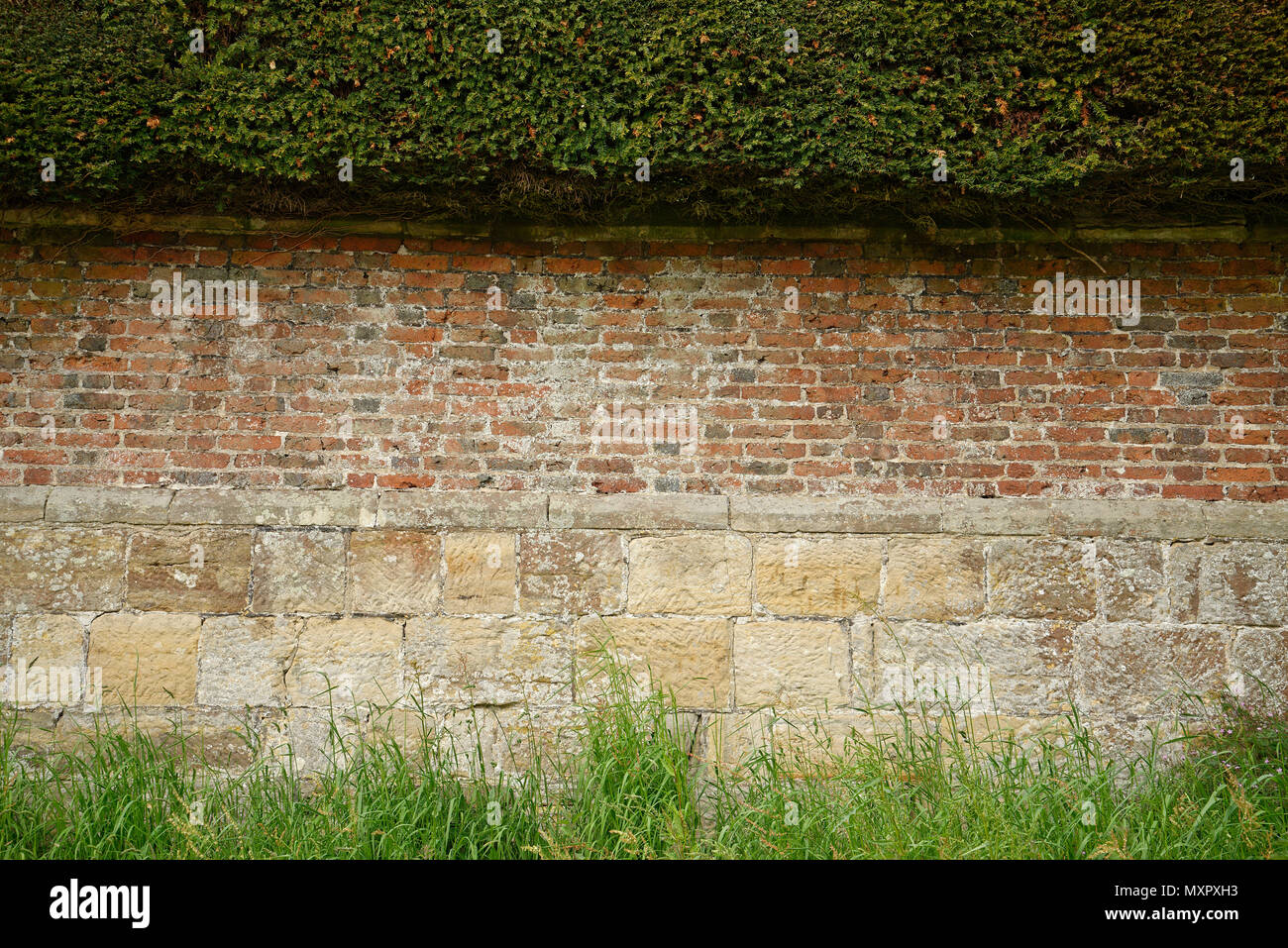 Yew hedge, brick wall and sandstone base. Three layered perimeter of property. Useful as a background for text. - Stock Image